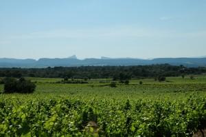 Vue sur le Pic Saint Loup depuis les vignes du vin blanc l'Aigalade