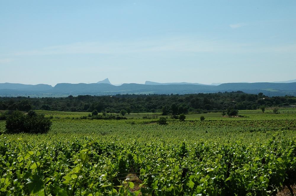 Vue sur le Pic Saint Loup depuis les vignes
