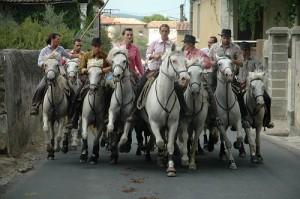 Une abrivado  à Souvignargues dans le Gard