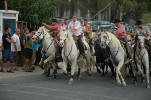 abrivado chevaux taureaux