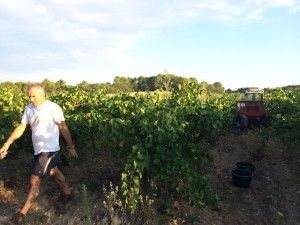vendanges Roussanne et Grenache blanc gite de la Bastide des Oliviers