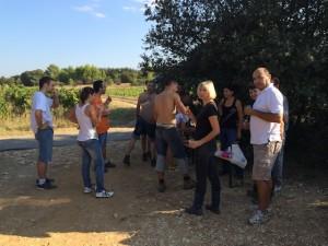 vendange AOP Languedoc avec les Gîtes de la Bastide des Oliviers à Souvignargues